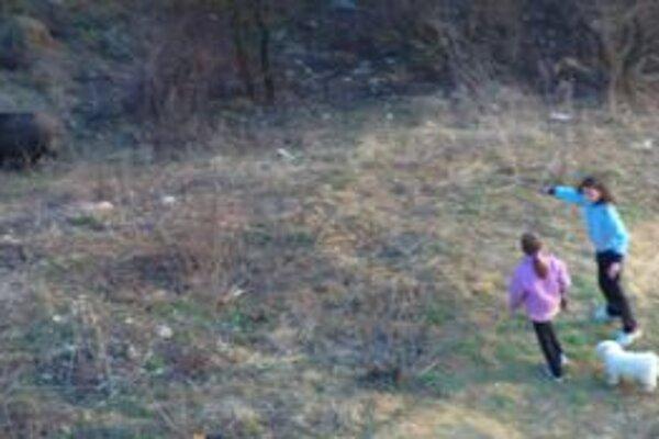 Deti diviaky, ktoré sa prechádzajú v blízkosti panelákov, kŕmajú a fotografujú.