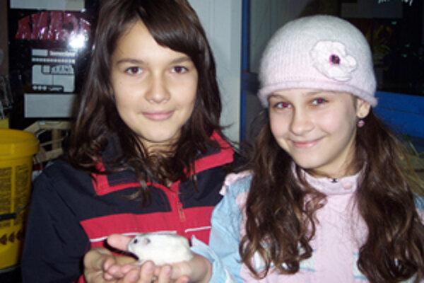 Kamarátky Barborka (vpravo) a Gabika si spoločne kúpili malého škrečka. Aké bude mať meno, zatiaľ nevedeli.