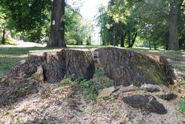 V Budatínskom parku vyrúbali stromy.