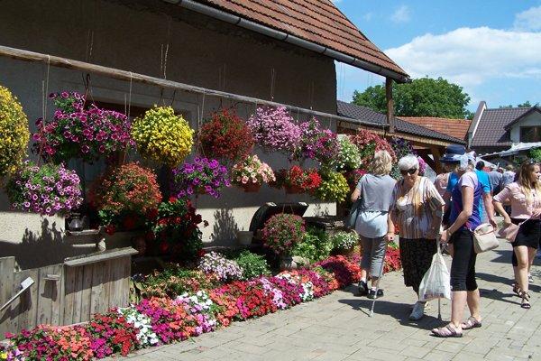 Kvet Podhradia zakvitol do krásy.
