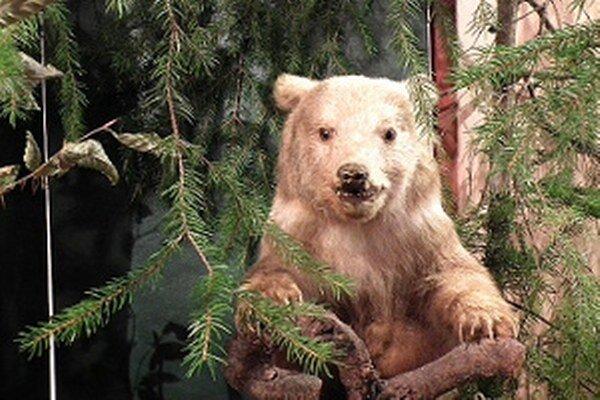 Krásy a vzácnosti oravskej prírody nájdete vo Florinovom dome do 7. decembra.