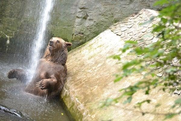 Niektoré druhy v záhrade, napríklad medveď, majú vo výbehu bazén.