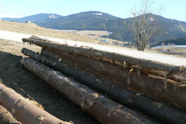 Drevo v Malatinej. Obec vydala zákaz ťažby a vývozu.
