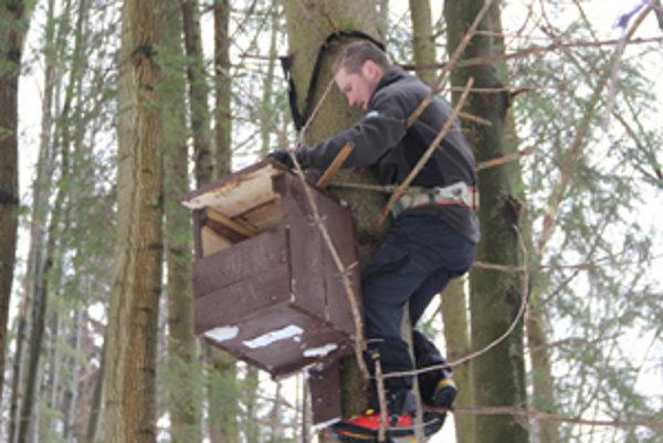 Tomáš Flajs umiestňuje na strom búdku pre sovu lesnú a dlhochvostú.