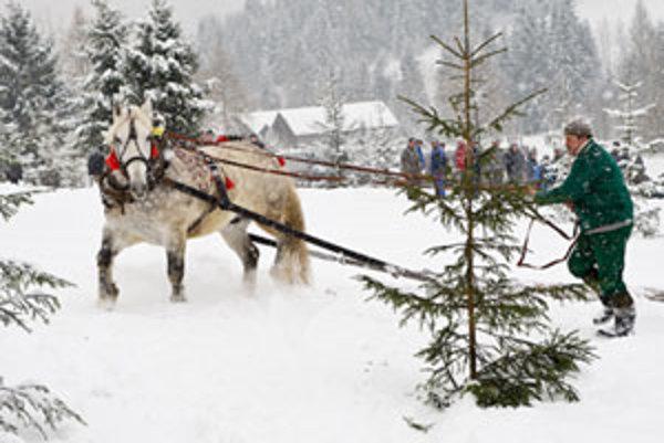 Hoci ťažné kone patria k chladnokrvníkom, pri súťaži prežívajú väčší stres, než pri práci v lese. Furmani tvrdia, že potom podávajú aj o čosi nižšie výkony, ako pri bežnej práci.