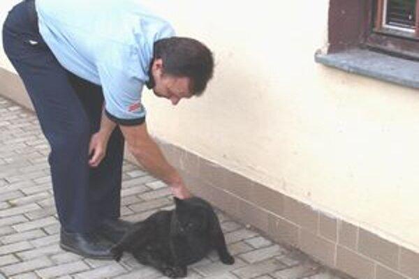 Kocúr. Kým odišiel do nového domova, strávil tri dni na mestskej polícii.