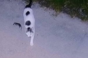 S mačkami z Dvorkinovej ulice mal jeden z obyvateľov problém. Sú ošetrené a pravidelne lovia myši.