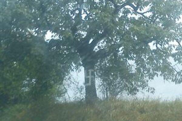 Páchateľ pomaľoval asi päť stromov.