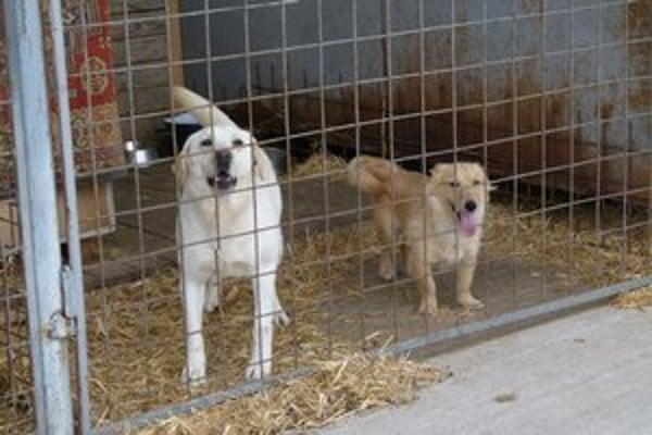 Psy v karanténnej stanici.