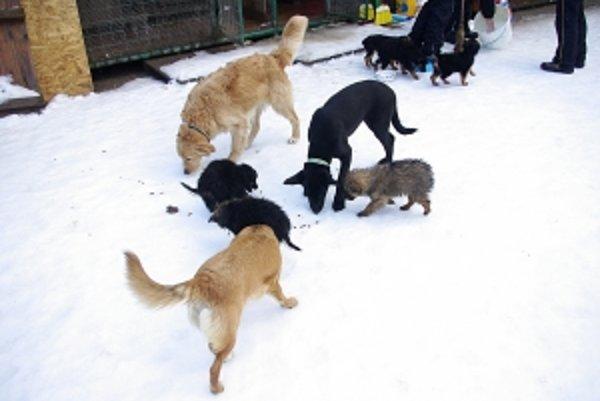 Starostovia sa bránia, že nemajú na odchyt túlavých psov v skromných rozpočtoch peniaze.
