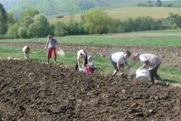 Rodina Hajasovcov z Podhradia na 1. mája sadila zemiaky