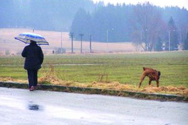 Cesta do Jahodníckych hájov je častým miestom vychádzok so psami.