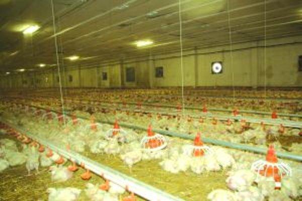 Na farme v Podhradí by ste dnes kurčatá hľadali márne.