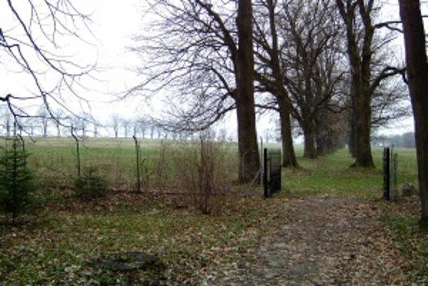 Pohľad z anglického parku. Aleje smerujúce z anglického parku smerom na Socovce.