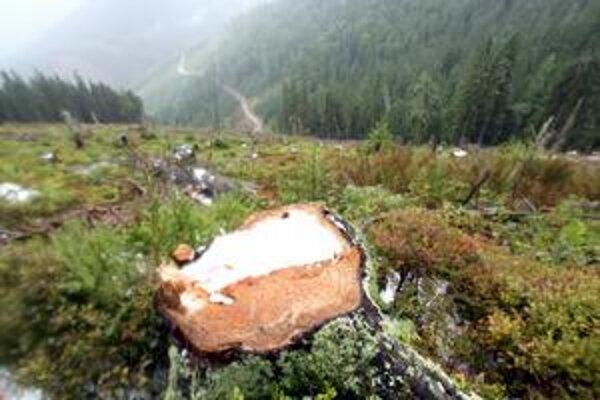 Lesy SR si na rozdiel od Správy Národného parku Veľká Fatra myslia, že zasahovať v Smrekovici sa musí.