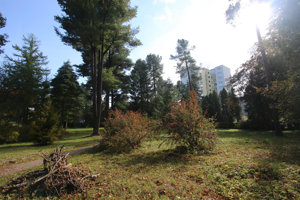 Arborétum sa nachádza uprostred zastavanej časti mesta