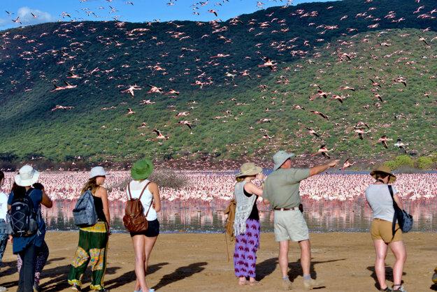 V Keni možno pozorovať státisíce plameniakov na jednom mieste.