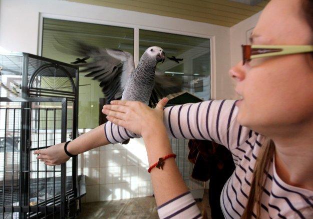 Starostlivosť o exotických vtákov je pre mnohých študentov príťažlivá.