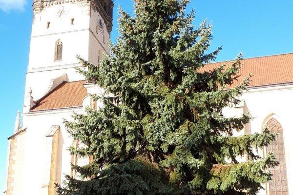 Vianočný strom v centre mesta je už pripravený na ozdobenie.