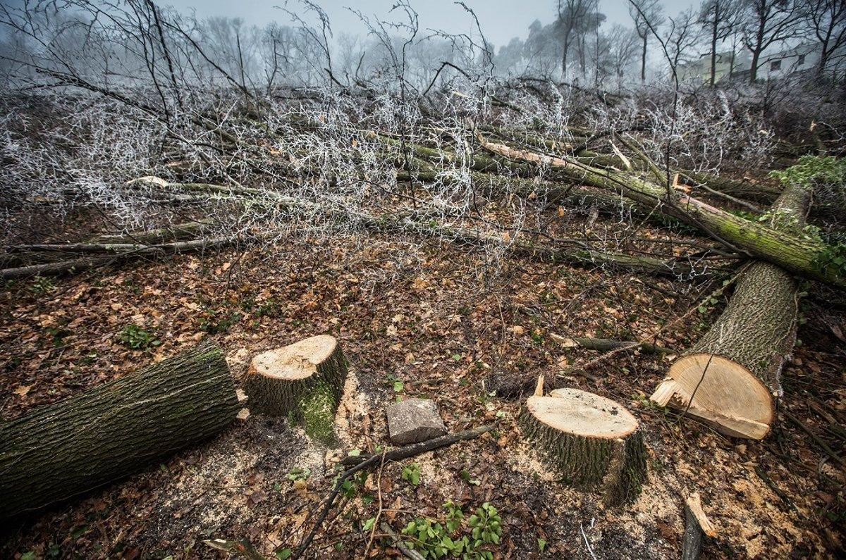 Za výrub stromov načierno hrozia páchateľovi až tri roky - presov ... 5dea43fc51