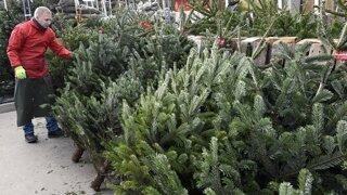 Umelý, rezaný, aj v kvetináči. Ako si vybrať vianočný stromček? (video)