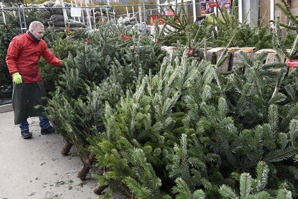 Vianočné stromčeky v Trenčíne.