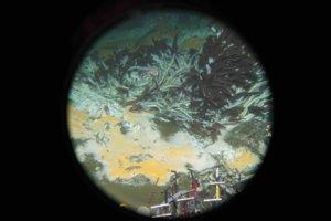 Dno kotliny Guaymas v Kalifornskom zálive, kde vedci objavili nové mikroorganizmy. Raz by mohli pomôcť pri odstraňovaní ropných škvŕn.