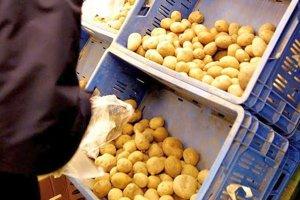 Nízka výkupná cena, dovoz zemiakov sú príčiny, prečo nie je o sadbu dostatočný záujem