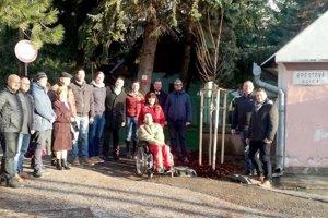Členovia Levického okrášľovacieho spolku mladý strom vysadili v polovici decembra.