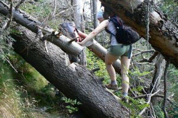 Predieranie sa pomedzi popadané stromy bude minulosťou.