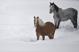 Kone v snehu v Garmisch-Partenkirchene v Nemecku.