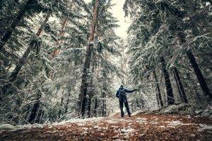 Prechádzka zimnou krajinou či lesom ponúka množstvo zaujímavých pohľadov.