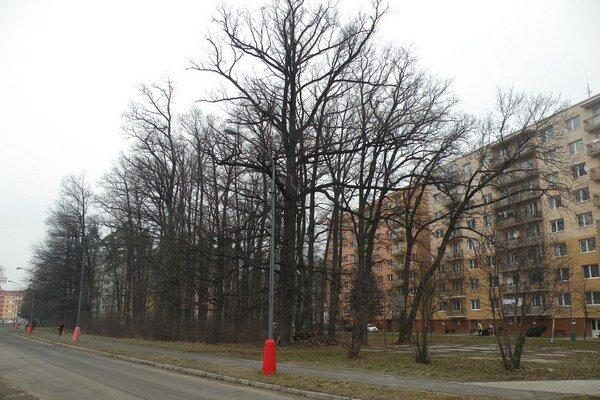 Bukový háj na Belanskej štvrti je napríklad najvyššie položený súvislý porast svojho druhu na Slovensku.