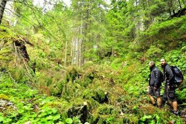 Chodník na Babky už urbárnici vyčistili od kalamitného dreva, napriek tomu treba byť pri prechode obozretný.
