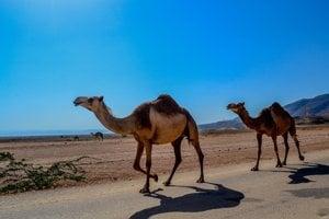 Turistický sprievodca do Salalah.