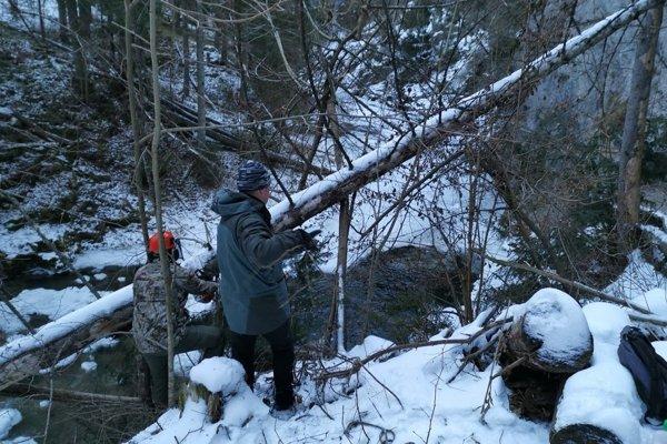 Ochranári odstraňovali popadané stromy z turistických chodníkov.