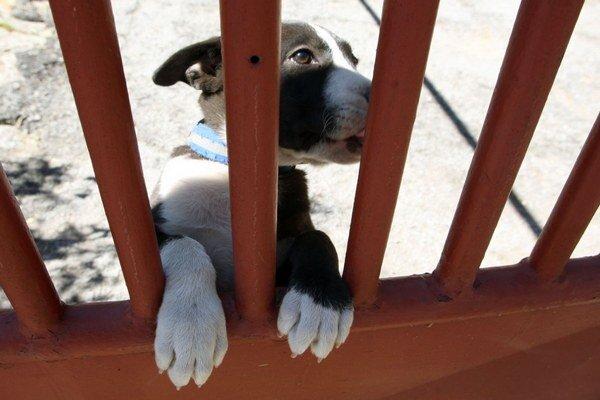 Podľa mnohých odborníkov je rozhodujúca výchova psa a nie plemeno.