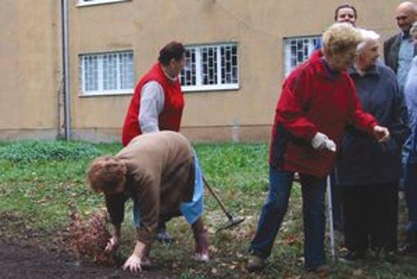 Dôchodcovia vybrali za symbol života strom, pretože znamená dlhovekosť.