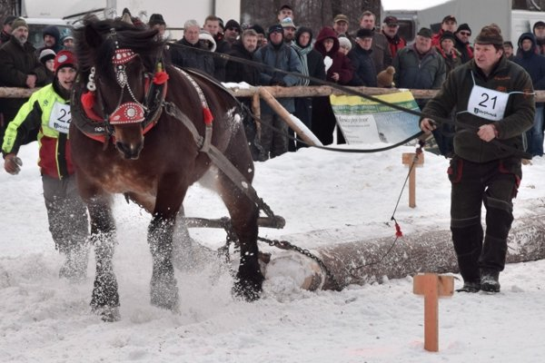 Furmanská súťaž ťažných koní v Hriňovej