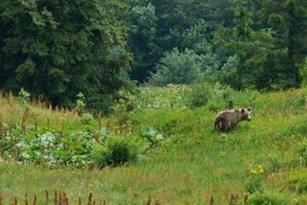 """Robin Rigg: """"Napriek tomu, že medvedia populácia sa u nás zvyšuje ročne asi o tri percentá, dnes s nimi ľudia dokážu harmonicky žiť."""""""