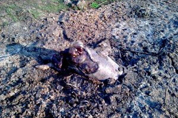 Fotografia, ktorú poslal do redakcie čitateľ, aby upozornil na vývoz uhynutých zvierat. Miesto sa nachádza asi 600 metrov nad kostolom v Považskej Teplej. Ide o mestskú časť Považskej Bystrice.