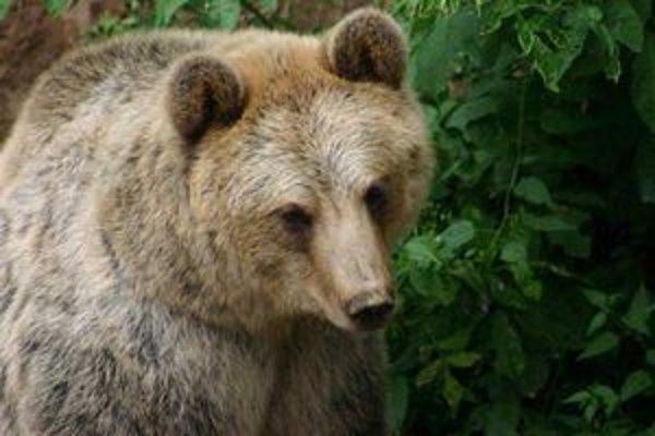 Projektom Bears (medvede) chce Robin Rigg a spoločnosť SWS dosiahnuť lepšie spolužitie ľudí s medveďmi.