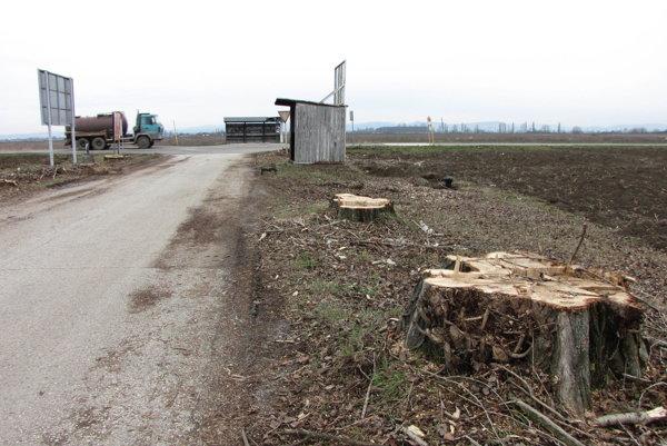 Na výrub mali riadne povolenie. Zrezané stromy už odviezli do štiepky.