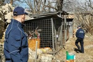 Mestská polícia je vyškolená v odchyte túlavých zvierat.