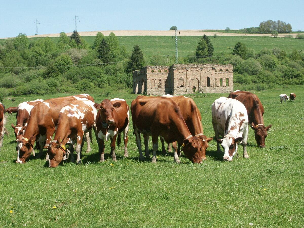 d770d5263 Daniel Chomistek: Poľnohospodárstvo funguje ako perpetuum mobile ...