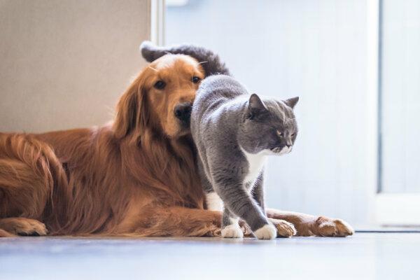 Nová štúdia má názov: Pes má pána, mačka má služobníctvo.