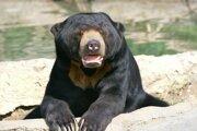 Medve´d malajský v Zoo.