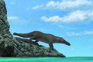 Ilustrácia možnej podoby štvornohej veľryby Peregocetu.