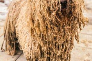 Smutný pohľad na jedného zo psíkov.