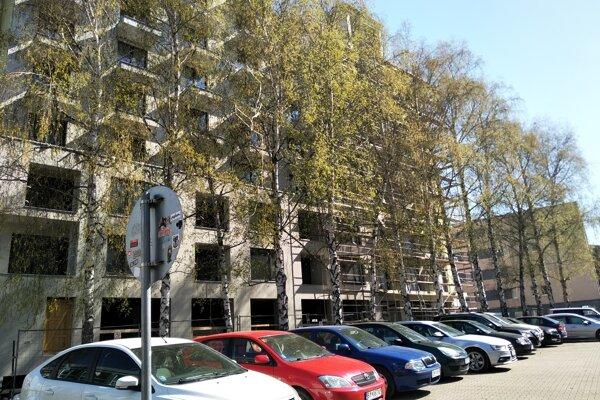Vysoké brezy medzi parkoviskom pri Úrade ŽSK a staveniskom bytového domu Malá Praha.